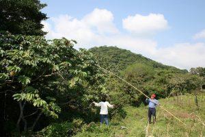 Guarumbo Wildsammlung