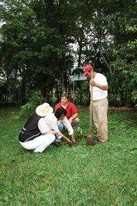 Nopalife_Guarumbo-Anpflanzung